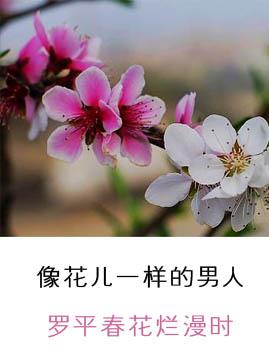 油菜花等四花争春 罗平春花烂漫时(图