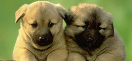 """我和狗狗有个约会 """"星光帮""""走秀"""