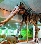 北京周末亲子游 自然类博物馆(图)