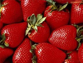 京郊 早春草莓采摘日记(图)
