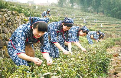 西湖国际茶博会4月登场