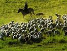 牧羊人和羊群