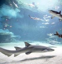 北京海洋馆 世界最大的内陆水族馆(组图)